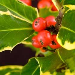 berry-buffet-1